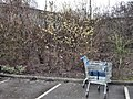 Catkins and trolleys - geograph.org.uk - 1726515.jpg