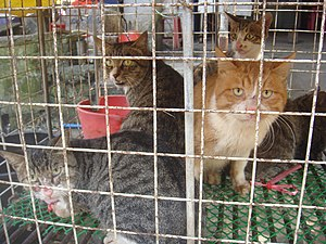 """Cat meat - Cats at a cat meat restaurant in China in October 2017. The cats cost the equivalent of around $4.20 USD per pound or around $20.00 USD per cat. The cat is made into a hotpot and sold as """"Dragon, Tiger and Phoenix Hotpot""""."""