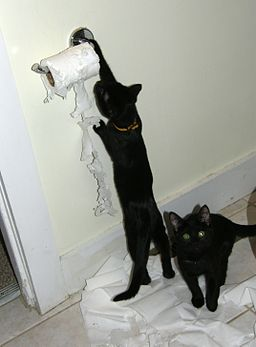 Cats attacking toilet paper