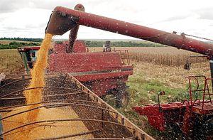 Cereal (grain maize) harvest in Brazil