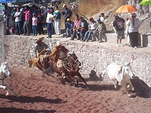 Charreada - A Charreada in progress with a charro attempting to catch a loose horse.