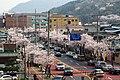 Cherry Blossom in Jinhae - panoramio.jpg