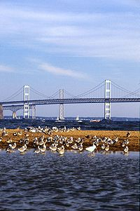 The Chesapeake Bay Bridge, which connects Maryland's Eastern and Western Shores, is the most popular route for tourists to reach the resort town of Ocean City.