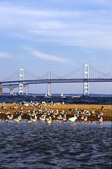 Chesapeake Bay Bridge.jpg