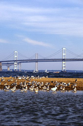 The Chesapeake Bay Bridge connects Maryland's Eastern and Western Shores. Chesapeake Bay Bridge.jpg