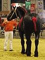 Cheval-percheron-noir SDA2014.JPG