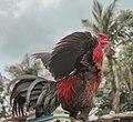 Chicken Handsome.jpg