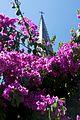 Chile - Santiago 16 - summer flowers (6834274030).jpg