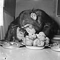 Chimpansees Hilda en Tilly uit Artis eten oliebollen, Bestanddeelnr 917-2804.jpg