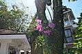 Choeng Thale, Thalang District, Phuket 83110, Thailand - panoramio (171).jpg