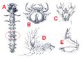 Cicindela hybrida larva.png