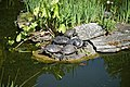 City of London Cemetery Terrapin pond 05.jpg