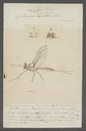 Cloë - Print - Iconographia Zoologica - Special Collections University of Amsterdam - UBAINV0274 067 02 0013.tif
