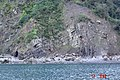 Clovelly strata - geograph.org.uk - 18503.jpg