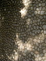 Cobblestoned wall of a house - Takhti st - Nishapur 1.JPG