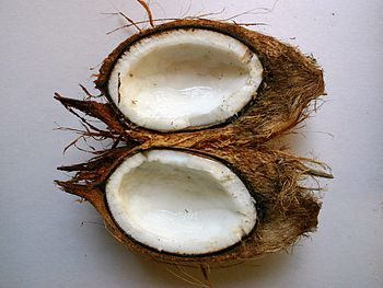 English: Longitudinal section of Cocos nucifer...