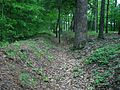 Cold Harbor, Confederate trench.jpg
