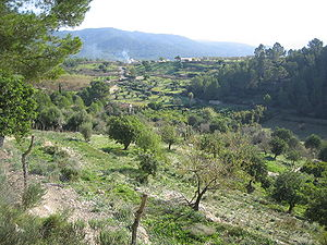 Landschaft bei Calvià
