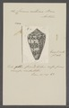 Conus centurio - - Print - Iconographia Zoologica - Special Collections University of Amsterdam - UBAINV0274 086 07 0034.tif