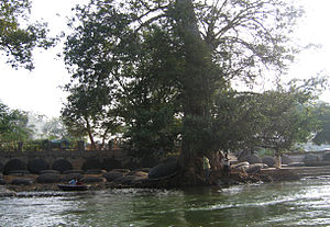 Coracles used at Hogenakkal placed in the shore.jpg