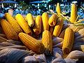 Corn 01625 Nevit.jpg