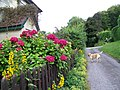 Cottage garden at Stop Street - geograph.org.uk - 895824.jpg
