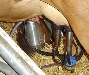 Farm - A milking machine in action