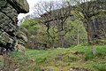 Crags above Eaves Wood - geograph.org.uk - 412428.jpg