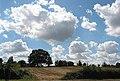 Crop field near Rose Hill Farm - geograph.org.uk - 519372.jpg