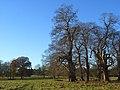 Crowsley Park - geograph.org.uk - 1059505.jpg