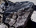 Crusted obsidian at Mono Craters-1000px.jpg