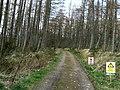 Culloden Forest - geograph.org.uk - 370207.jpg