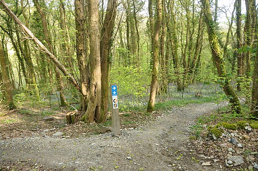 Cycle track in Plymbridge Woods (4564)
