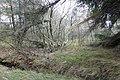 Dünen-Schutzwald bei St. Peter-Ording.jpg