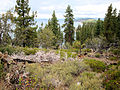 DSC02814, South Lake Tahoe, Nevada, USA (8098628315).jpg