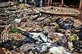 Dead organisms Abomey-Benin (5).jpg