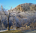 December 2008 ice storm damage at Storm King trailhead.jpg