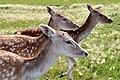 Deer Meadow Farms Corn Maze, Deacon Rd, Birds Hill (502018) (16363831982).jpg