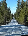 Deschutes National Forest, Oregon USA - Ice Cave Road - panoramio.jpg
