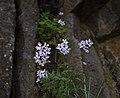 Deschutes Wild and Scenic River -- Beavertail (26122288545).jpg