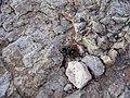 Desert Spider - panoramio.jpg