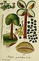 Deutschlands flora in abbildungen nach der natur (1832) (20863223806).jpg