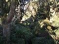 Devonshire Road Rock Gardens - panoramio (3).jpg