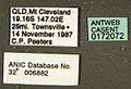 Diacamma australe casent0172072 label 1.jpg