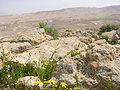Die Negev blueht.jpg