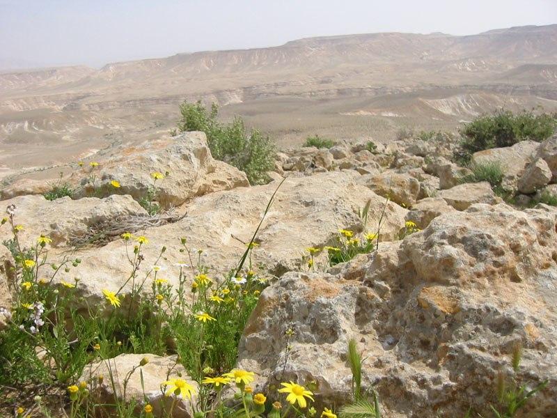 Die Negev blueht