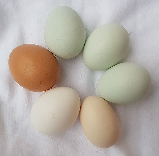 Different colored chicken eggs-01ASD.jpg