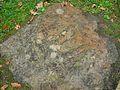 Dinosaurierspuren Bad Nenndorf 2.JPG