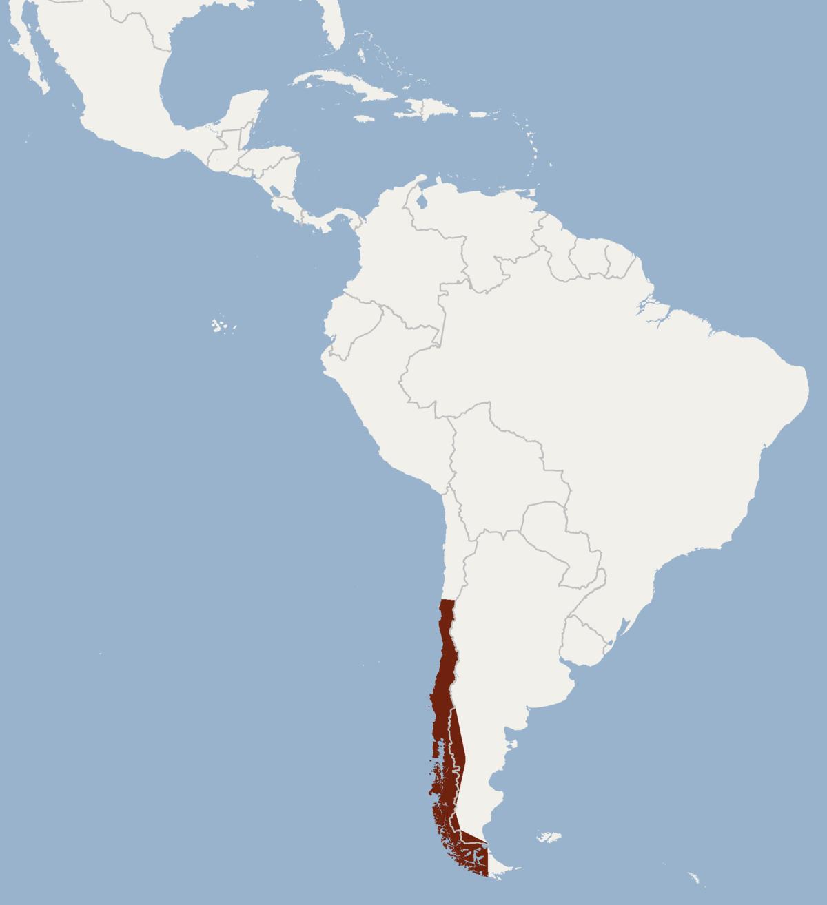 cinnamon red bat wikipedia