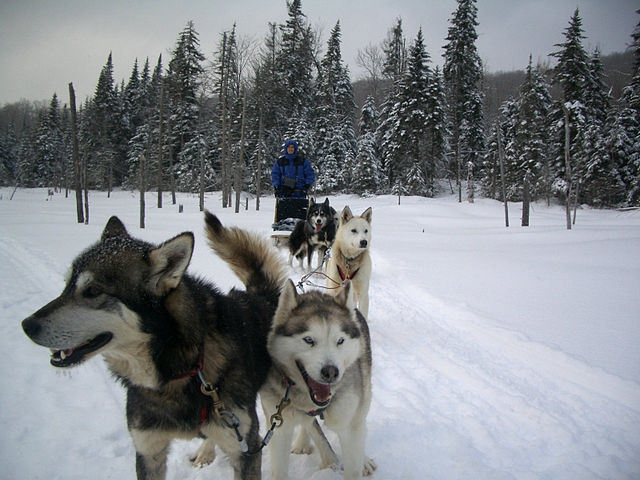 do: Mush a Dog Sled